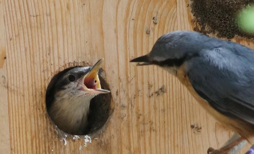 Vogel in Vogelhaus